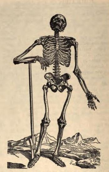 Skeleton from De humani corporis fabrica